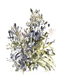 Senecio and Other Plants, 2003 Giclee Print by Claudia Hutchins-Puechavy
