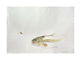 Trout Chasing a Fisherman's Fly (1991) Giclee Print by Lou Gibbs