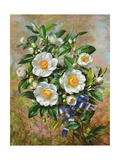 Coronation Camelia from the 'Golden Jubilee' Series, 2002 Giclee Print by Albert Williams