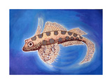 Dragonet Fish, 1999 Giclee Print by Nat Morley