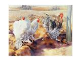Earls Grove, 1995 Impression giclée par Sandra Lawrence