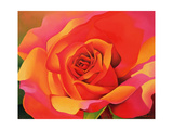 A Rose - Transformation into the Sun, 2001 Giclee Print by Myung-Bo Sim