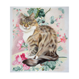 Long Hair Tabby Giclee Print by Anne Robinson