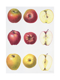 Six Apples, 1996 Giclee Print by Margaret Ann Eden