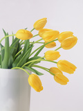 Yellow Tulips I, 1999 Fotodruck von Norman Hollands