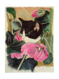 Kitten and Hollyhocks Giclee Print by Anne Robinson