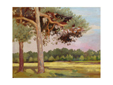 Landscape with Fir Trees Giclee Print by Augustus Edwin John