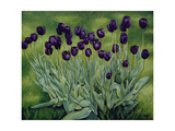 Black Tulips, 2002 Giclee Print by Peter Breeden