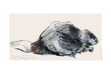 European Beaver (Study) 2001 Giclee Print by Mark Adlington