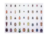 Beetles, 1999 Giclee Print by Charlie Baird