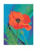 Poppy, 2009 Giclee Print by Sarah Gillard