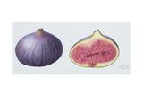 Figs, 1995 Giclee Print by Margaret Ann Eden