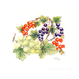 Black and Red Currants with Green Grapes, 1986 Giclee Print by Nell Hill