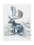 Buck in the Grass, 2006 Giclee Print by Mark Adlington
