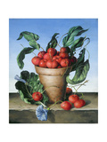 Cherries in Terracotta with Blue Flower Giclee Print by Amelia Kleiser