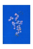Forget-Me-Not, 1960s Giclee Print by George Adamson