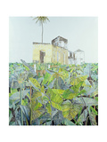 Ruin in a Swamp, Haiti, 1971 Giclee Print by James Reeve