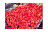Tomatoes, 1999 Giclee Print by Peter Breeden