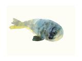 Aqua Green Giclee Print by Mark Adlington