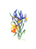 Blue Iris and Daffodil, 2002 Giclee Print by Nell Hill