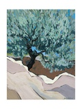 Olive Tree in Crevice, 2010 Giclee Print by Sarah Gillard