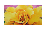 The Golden Rose, 2004 Giclee Print by Myung-Bo Sim