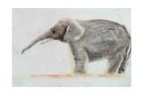 Elephant Giclee Print by Jung Sook Nam
