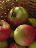 Cox's Apples in Basket, 1994 Photographic Print by Norman Hollands