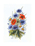 Cornflower, Poppy and Ox-Eye Daisy Giclee Print by Nell Hill