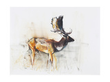 Magnificent Fallow Buck, 2006 Giclee Print by Mark Adlington