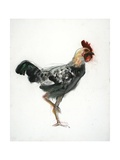 Cockerel, C.1990 Giclee Print by Alexander Goudie