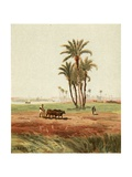 In the Field Giclee Print by Henry Andrew Harper