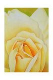 The Rose, 1995 Giclee Print by Myung-Bo Sim