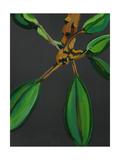 Frangipani Leaves, Bequia, 2008 Giclee Print by Deborah Barton