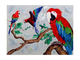 Macaws, 2006 Giclee Print by Maylee Christie
