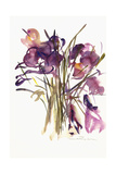 Crocus, 2003 Giclee Print by Claudia Hutchins-Puechavy