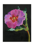 Cistus, New Zealand, 2007 Giclee Print by Deborah Barton