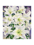 White Lilies, 2008 Giclee Print by Christopher Ryland