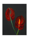 Anthurium, Heart Flower, 2008 Giclee Print by Deborah Barton