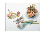 Study of Garlic and Shallots, C. 1990 Giclee Print by Alexander Goudie
