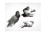 Les Pigeons, C.1985 Giclee Print by Alexander Goudie