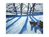 Sheep in Snow, Derbyshire Giclee Print by Andrew Macara