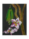 Frangipani Flower, Bequia, 2008 Reproduction procédé giclée par Deborah Barton