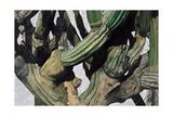 Cardon Cactus in Baja California, 2004 Giclee Print by Pedro Diego Alvarado