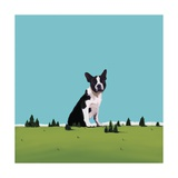 Boston Terrier, 2008 Giclee Print by Marjorie Weiss