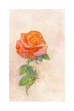 Pale Rose, 1980s Giclee Print by George Adamson