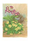 Auricula, Primrose and Nest, 1998 Giclee Print by Linda Benton