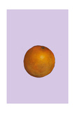 Orange, 2007 Giclee Print by Sarah Thompson-Engels