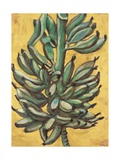 Bunch of Bananas, 1991 Giclee Print by Pedro Diego Alvarado