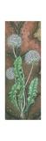 Dandelion Clock, 2009 Giclee Print by Sandra Moore